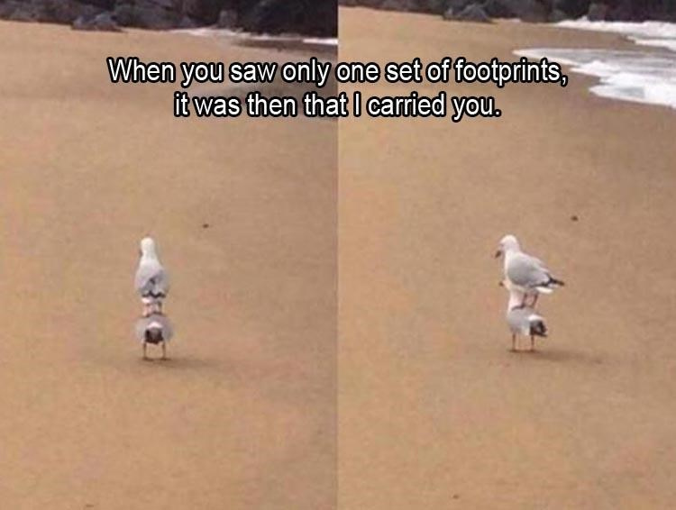 """The popular """"Footprints in the Sand"""" poem illustrated with two seagulls"""