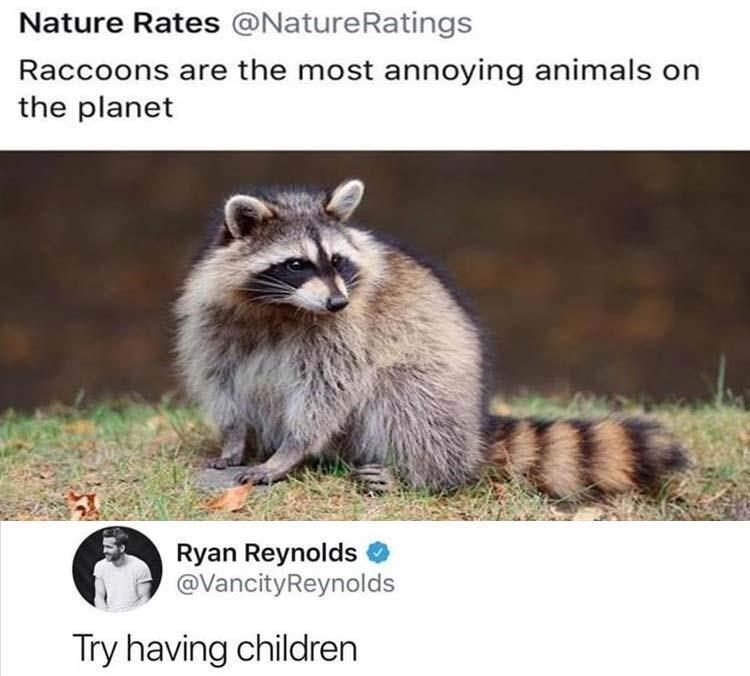 Ryan Reynolds on Twitter saying kids are more annoying than raccoons