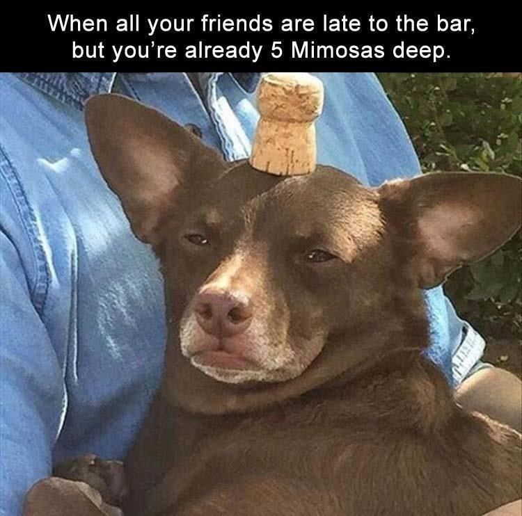 Meme about getting drunk by yourself with pic of dog with a wine bottle cork on its head