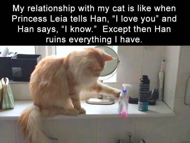 Meme comparing your relationship with your cat to that of Leia and Han Solo from Star Wars except more disastrous