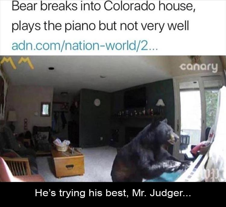 Security cam footage of bear playing piano in a house it broke into