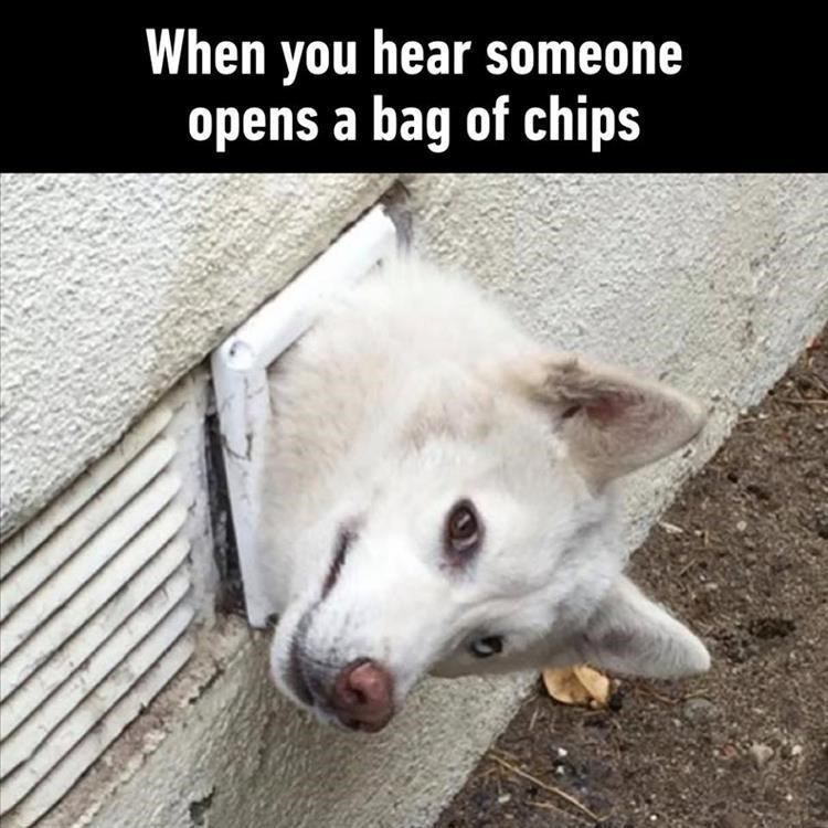 Meme about dogs wanting your food with pic of dog peeking from a hole int he wall