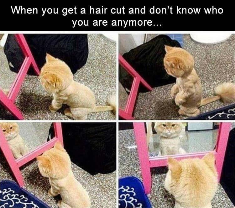 Meme about not recognizing yourself with a new haircut with pics of cat looking at itself in a mirror