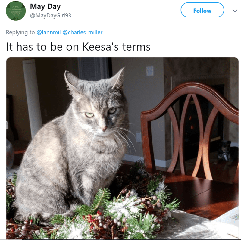 cat tweet - Cat - May Day and g de Follow @MayDayGirl93 Replying to @lannmil @charles_miller It has to be on Keesa's terms ON