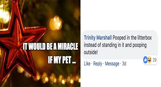Text - Trinity Marshall Pooped in the litterbox instead of standing in it and pooping outside! IT WOULD BEA MIRACLE IF MY PET 29 Like Reply Message 3d