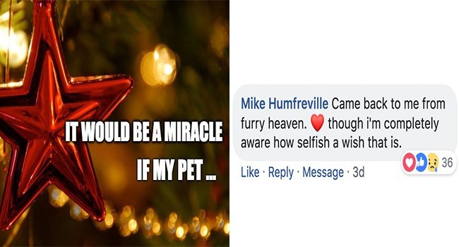 Text - Mike Humfreville Came back to me from furry heaven.though im completely aware how selfish a wish that is. IT WOULD BEA MIRACLE OD36 IF MY PET.. Like Reply Message 3d