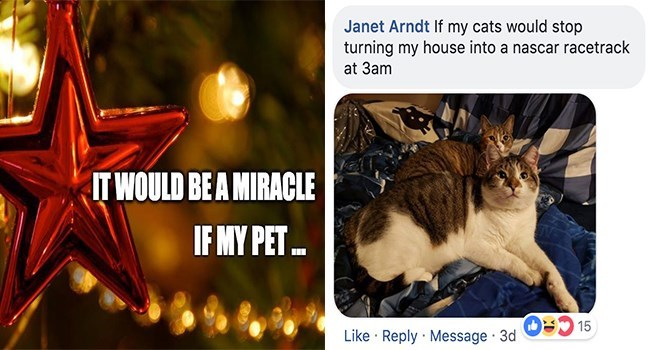 Cat - Janet Arndt If my cats would stop turning my house into a nascar racetrack at 3am IT WOULD BE A MIRACLE IF MY PET 15 Like Reply Message 3d