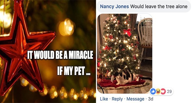 Christmas tree - Nancy Jones Would leave the tree alone IT WOULD BE A MIRACLE IF MY PET Like Reply Message 3d