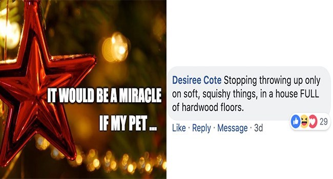 Text - Desiree Cote Stopping throwing up only on soft, squishy things, in a house FULL of hardwood floors. IT WOULD BE A MIRACLE IF MY PET D29 Like Reply Message 3d