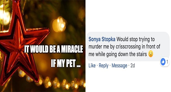 Text - Sonya Stopka Would stop trying to murder me by crisscrossing in front of me while going down the stairs IT WOULD BE A MIRACLE IF MY PET. 1 Like Reply Message 2d