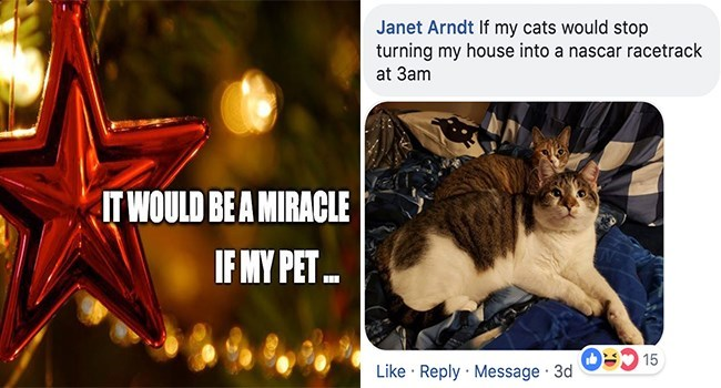 Cat - Janet Arndt If my cats would stop turning my house into a nascar racetrack at 3am IT WOULD BE A MIRACLE IF MY PET.. 15 Like Reply Message 3d