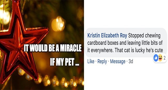 Text - Kristin Elizabeth Roy Stopped chewing cardboard boxes and leaving little bits of it everywhere. That cat is lucky he's cutei 09 2 ITWOULD BE A MIRACLE IF MY PET Like Reply Message 3d