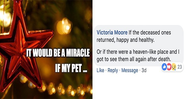Text - Victoria Moore If the deceased ones returned, happy and healthy Or if there were a heaven-like place and I got to see them all again after death. 23 IT WOULD BEA MIRACLE IF MY PET Like Reply Message 3d