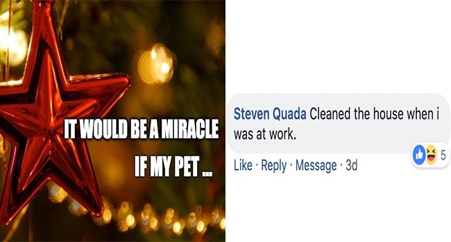 Text - Steven Quada Cleaned the house when i IT WOULD BE A MIRACLEwas at work. 5 IF MY PET Like Reply Message 3d