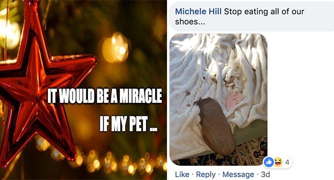 Font - Michele Hill Stop eating all of our shoes... IT WOULD BE A MIRACLE IF MY PET 4 Like Reply Message 3d