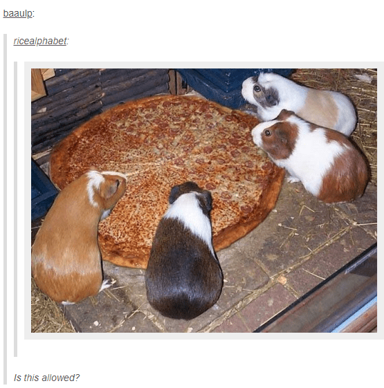 Canidae - baaulp: ricealphabet Is this allowed?