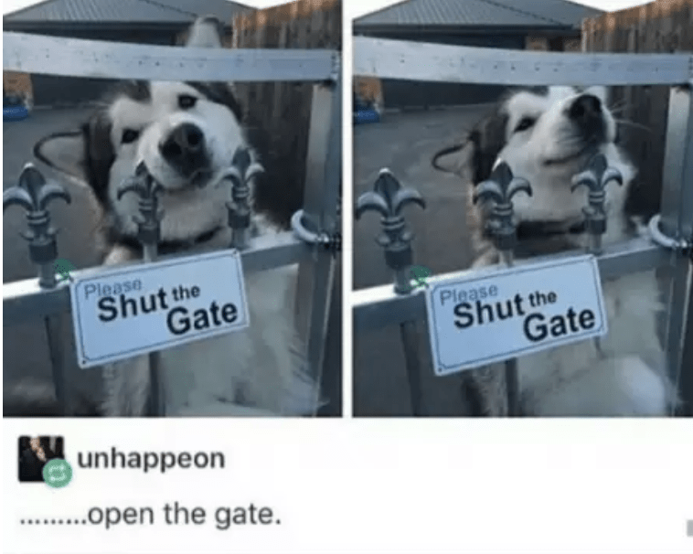 Canidae - Please Shut the Gate Please Shut the Gate unhappeon . open the gate.