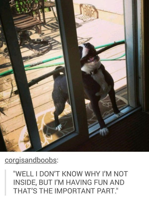 """Dog - corgisandboobs: """"WELL I DON'T KNOW WHY I'M NOT INSIDE, BUT I'M HAVING FUN AND THAT'S THE IMPORTANT PART."""""""