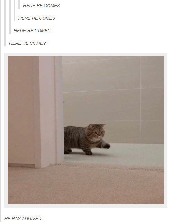 Cat - HERE HE COMES HERE HE COMES HERE HE COMES HERE HE COMES HE HAS ARRIVED