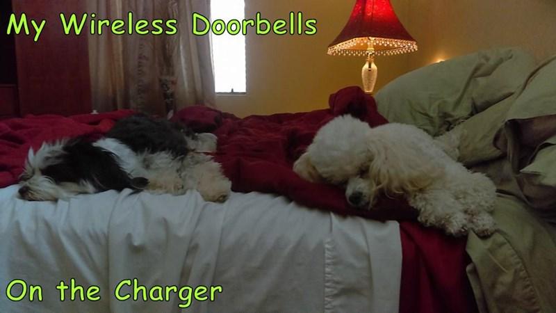Cheezburger Image 9248911104