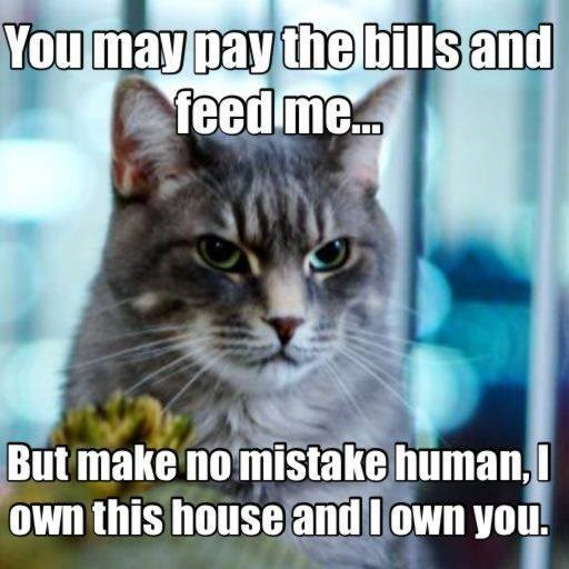 cat meme - Cat - You may pay the bills and feed me... But make no mistake human, Own this house and lown you.