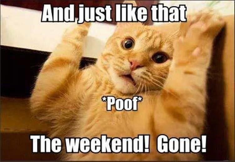 cat meme - Cat - And just like that Poot The weekend! Gone!