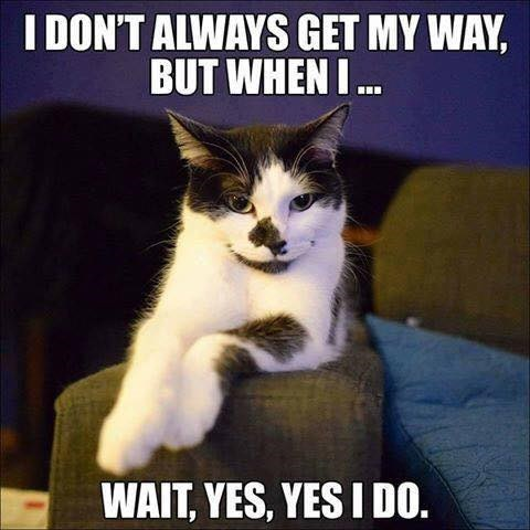 cat meme - Cat - I DON'T ALWAYS GET MY WAY, BUT WHEN I WAIT, YES, YES I Do.