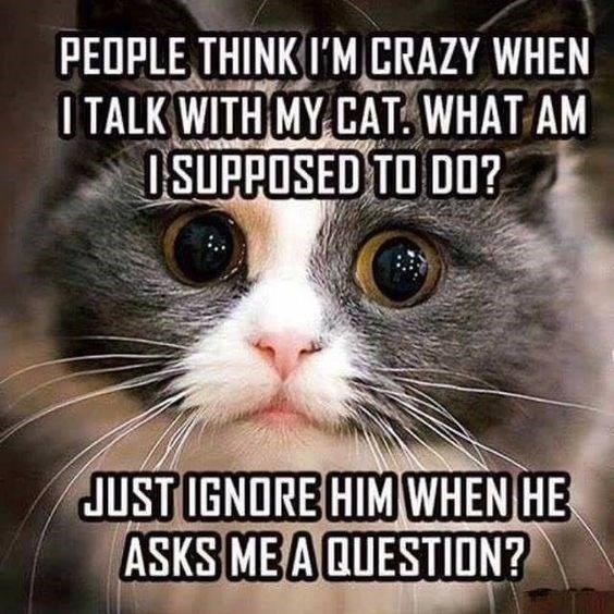 cat meme - Cat - PEOPLE THINK I'M CRAZY WHEN OTALK WITH MY CAT. WHAT AM OSUPPOSED TO D0? JUST IGNORE HIM WHEN HE ASKS ME A QUESTION?