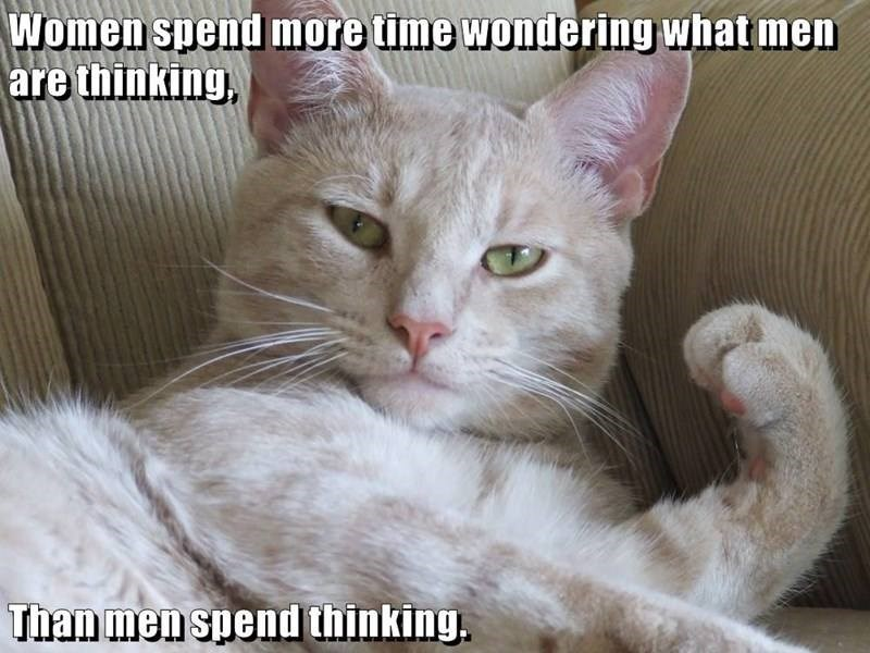 cat meme - Cat - Women spend more time wondering what men are thinking, Than men spend thinking.