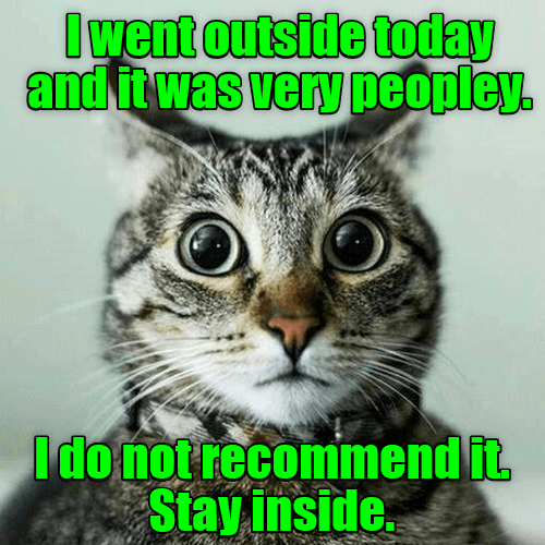 cat meme - Cat - Iwent outside today and itwas very peopley. Ido not recomimend it Stay inside.