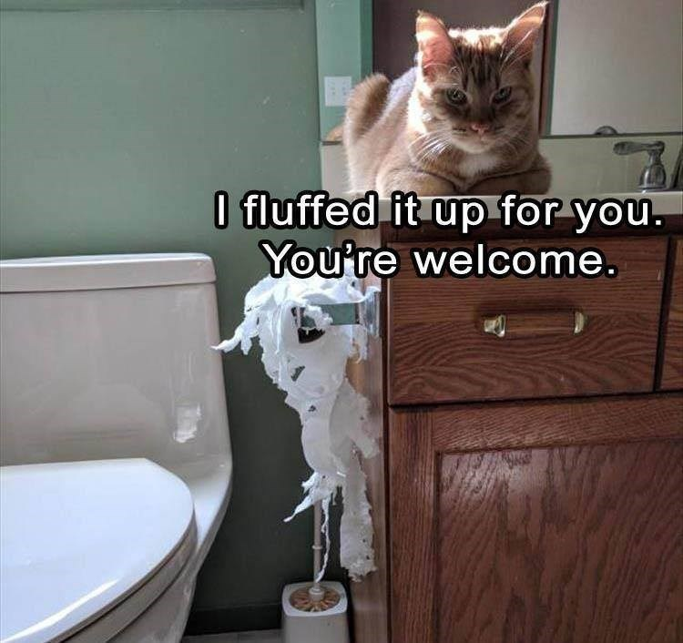 cat meme - Cat - I fluffed it up for you. You're welcome.