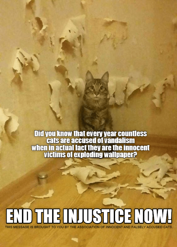 cat meme - Cat - Did you know that every year countless cats are accused of vandalism when in actual fact they are the innocent victims of exploding wallpaper? END THE INJUSTICE NOW! THIS MESSAGE IS BROUGHT TO YOU BY THE ASSOCIATION OF INNOCENT AND FALSELY ACCUSED CATS.