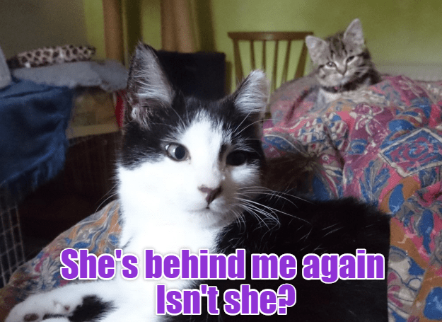 cat meme - Cat - She's behind me again Isntshe?