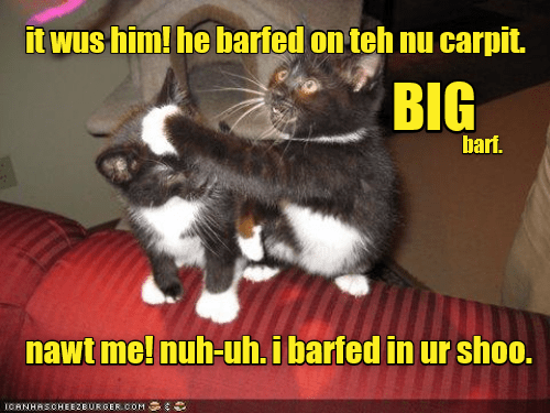 cat meme - Photo caption - it wus him! he barfed on teh nu carpit. BIG barf. nawt me! nuh-uh.i barfed in ur shoo. ICANHASOHEEZEURGER COM