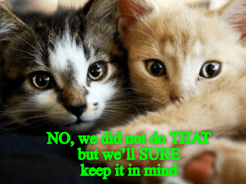 cat meme - Cat - NO, werdidno do THAT but we ll SURE keep it in mind