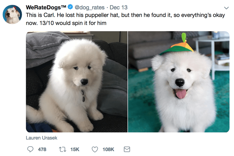 Mammal - WeRateDogsTM This is Carl. He lost his puppeller hat, but then he found it, so everything's okay @dog_rates Dec 13 now. 13/10 would spin it for him Lauren Urasek 115K 478 108K