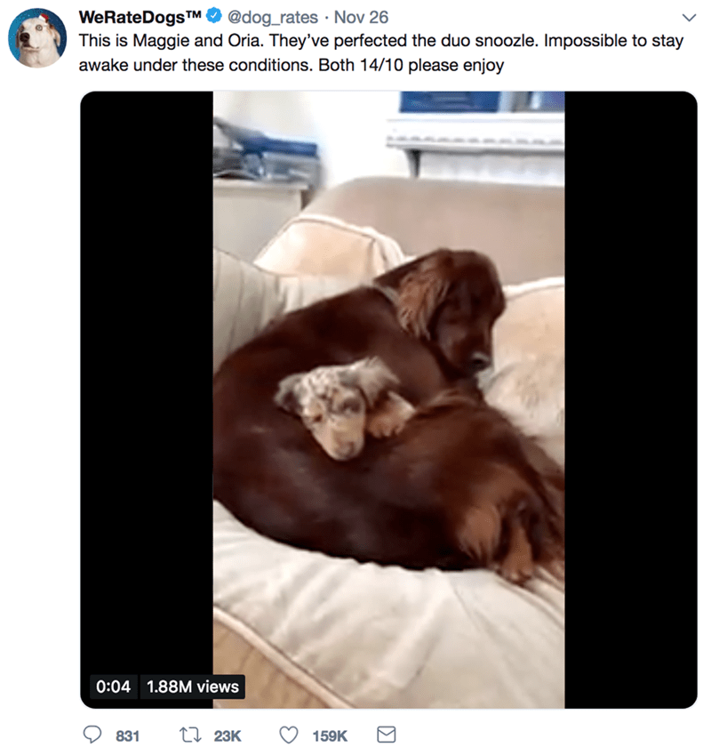 Dog - @dog_rates Nov 26 WeRate DogsTM This is Maggie and Oria. They've perfected the duo snoozle. Impossible to stay awake under these conditions. Both 14/10 please enjoy 0:04 1.88M views LI 23K 831 159K