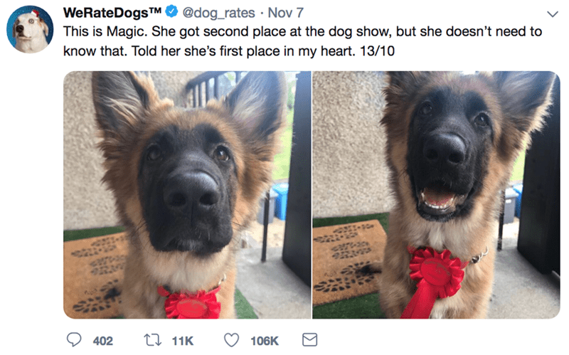 Vertebrate - WeRateDogsTM This is Magic. She got second place at the dog show, but she doesn't need to @dog_rates Nov 7 know that. Told her she's first place in my heart. 13/10 2!-s0 t 11K 402 106K