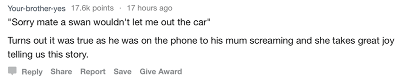 """askreddit - Text - Your-brother-yes 17.6k points 17 hours ago """"Sorry mate a swan wouldn't let me out the car"""" Turns out it was true as he was on the phone to his mum screaming and she takes great joy telling us this story Reply Share Report Save Give Award"""