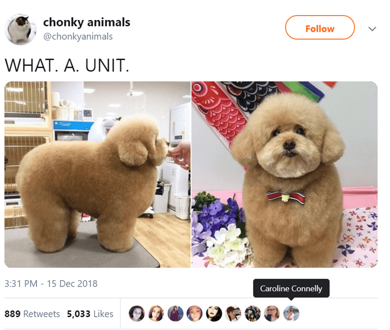 Dog - chonky animals @chonkyanimals Follow WHAT. A. UNIT. 3:31 PM 15 Dec 2018 Caroline Connelly 889 Retweets 5,033 Likes