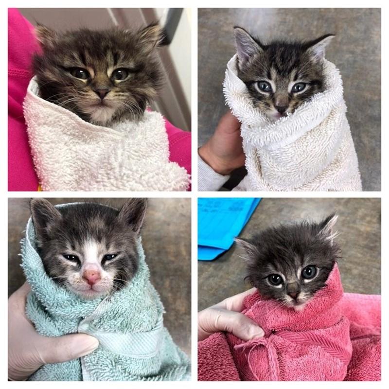 aww so cute kitten purrito - 9249217536