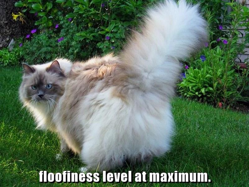 Floofiness level at maximum.