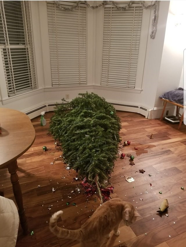 unfortunate moments of a cat who knocked down a Christmas tree