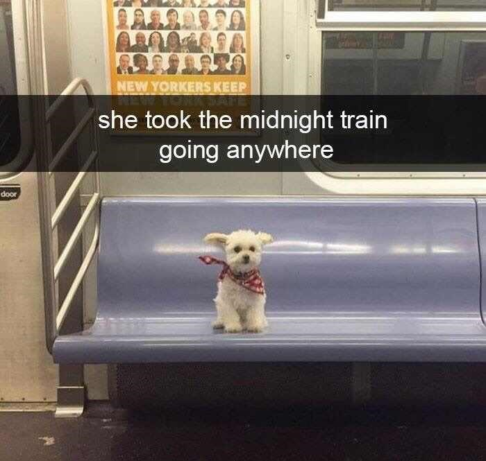 """dog meme of a little dog riding on a subway with Snapchat text overlay that reads, """"She took the midnight train going anywhere"""""""