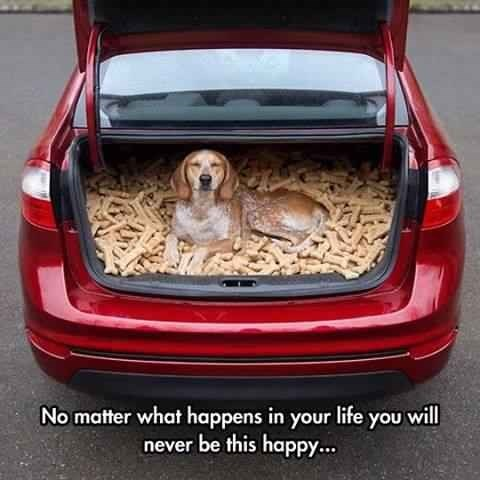 """dog meme of a beagle lying in a trunk with tons of dog treats and text that reads, """"No matter what happens in your life you will never be this happy..."""""""