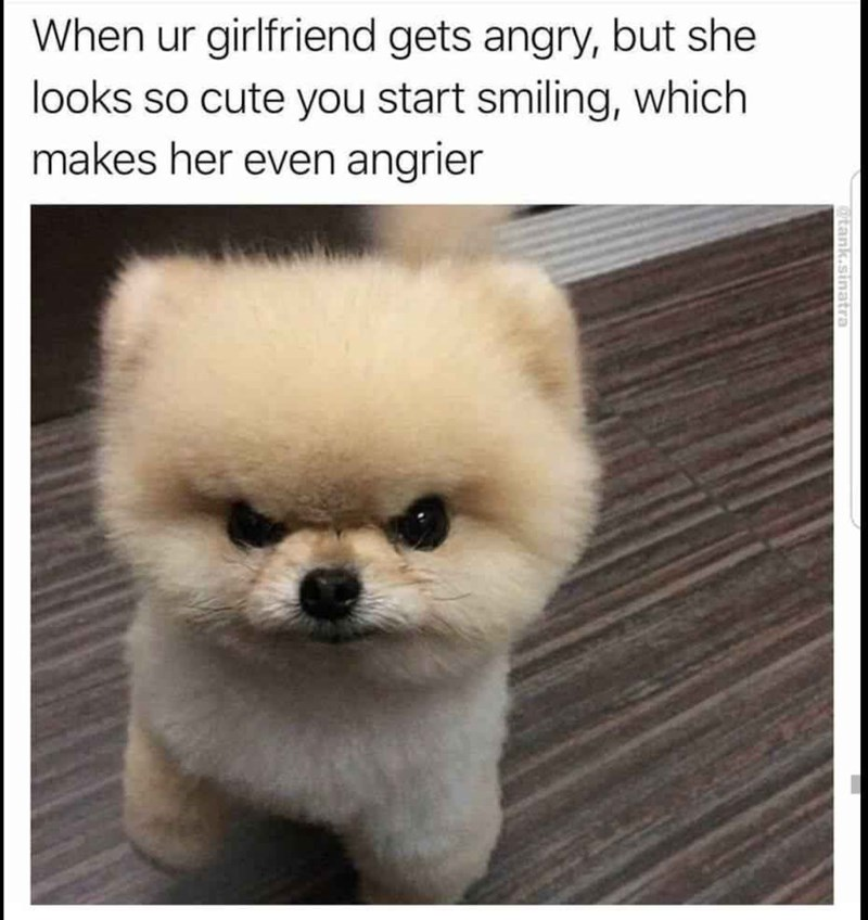 dog meme about cute people getting angry with pic of mean looking Pomeranian