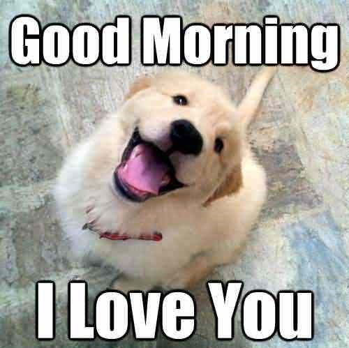 dog meme with pic of cute golden puppy