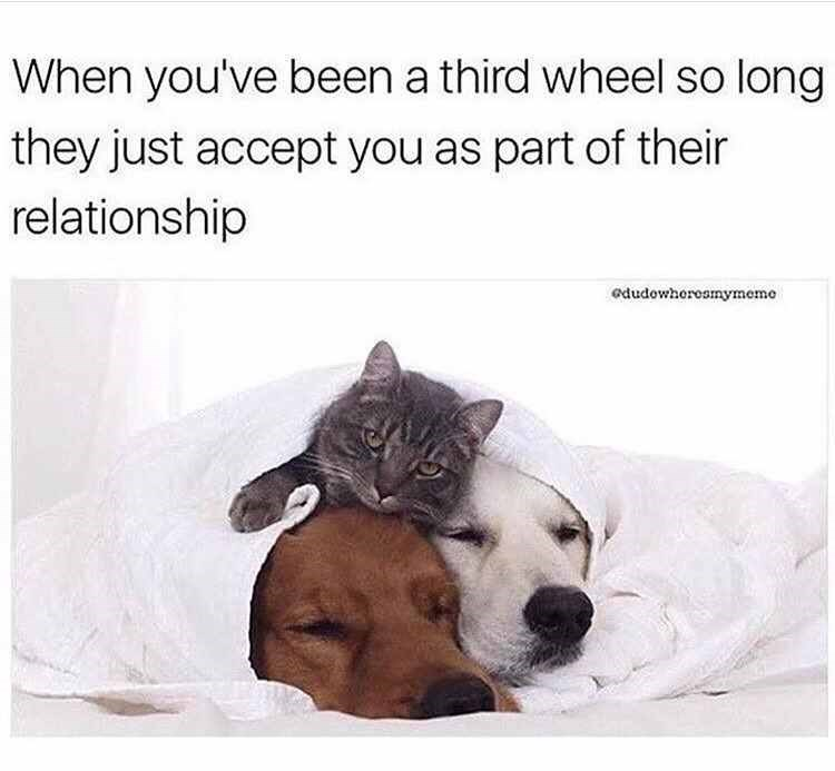 dog meme about becoming part of your friends' relationship with pic of cat sitting on top of sleeping pair of dogs