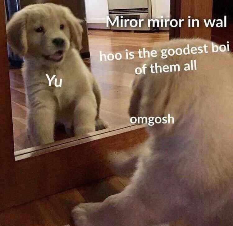 dog meme about puppy using a magic mirror like the evil queen from Snow White