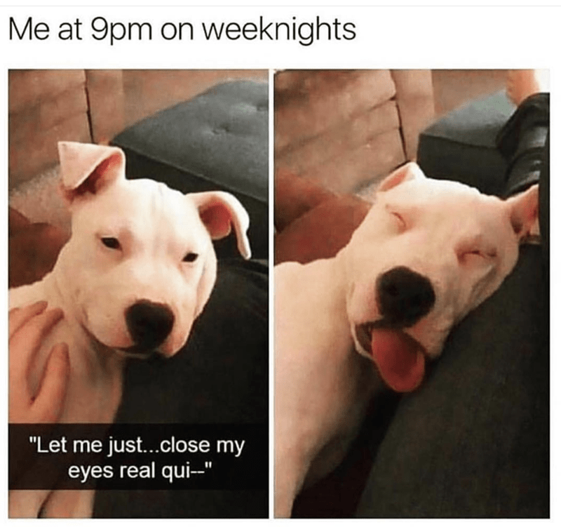 dog meme about falling asleep early with pic of passed out dog